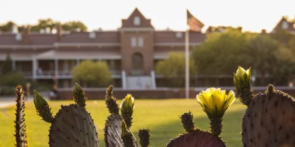 Cactuses against the backdrop of the Old Mail building at the University of Arizona
