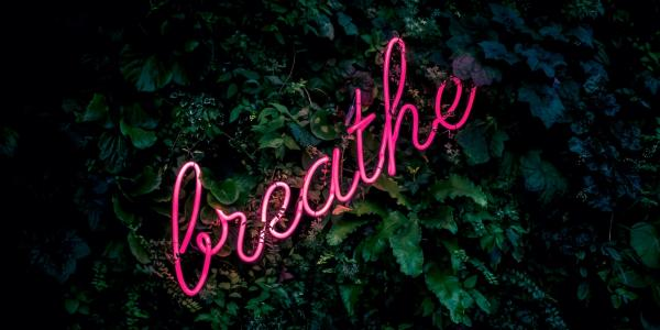 """breathe"" on a plant wall"